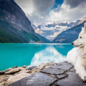 Tips on Choosing a Natural Dog Food That is Actually Healthy